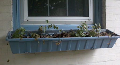 My window box, full of dead plants
