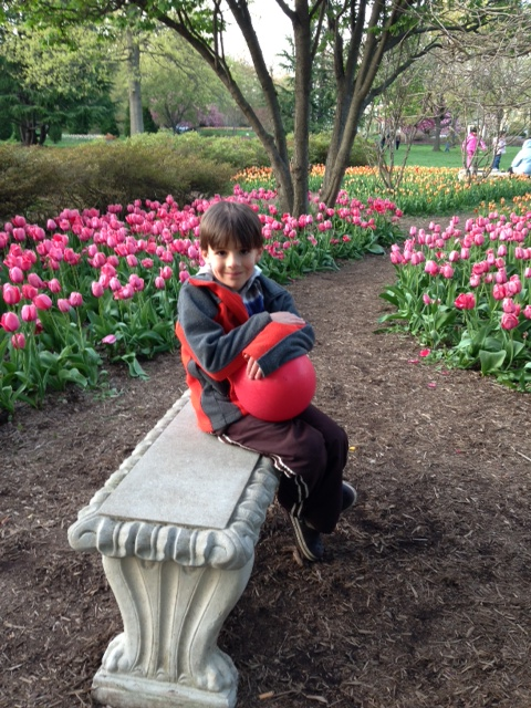 My 6yo sitting among the tulips