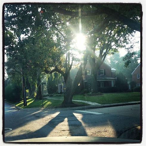 morning light streaming through trees