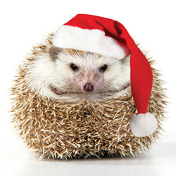 hedgehog wearing a Santa hat