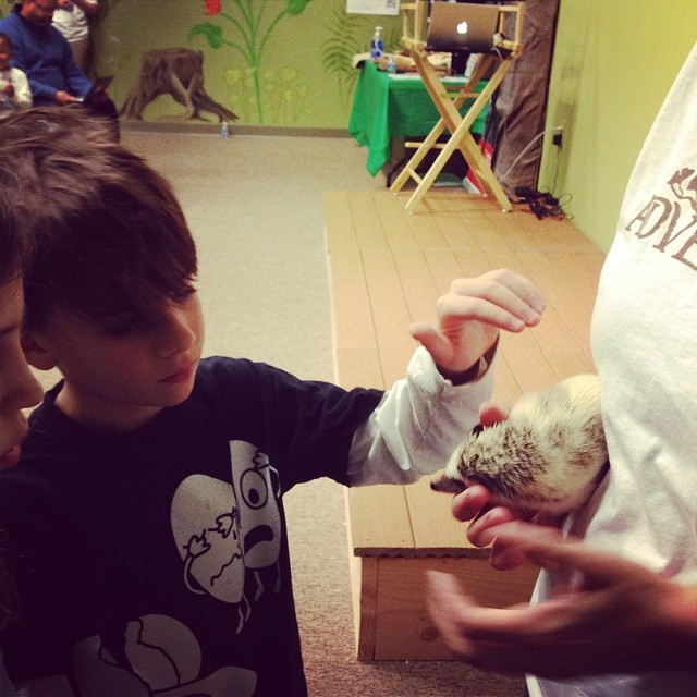 Boy petting a hedgehog