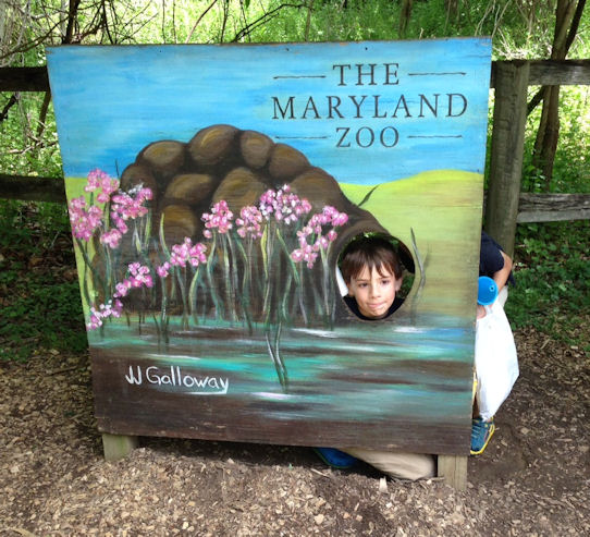 my son at the Maryland Zoo in Baltimore