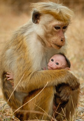 Monkey Kingdom: Maya and her baby
