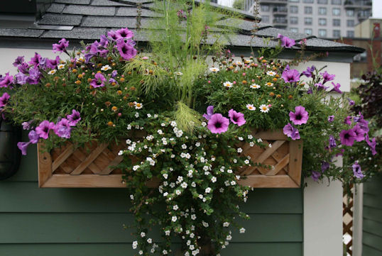 Nice Window Box Full Of Flowers